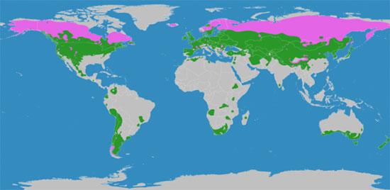 Доклад на тему умеренный климатический пояс 4094